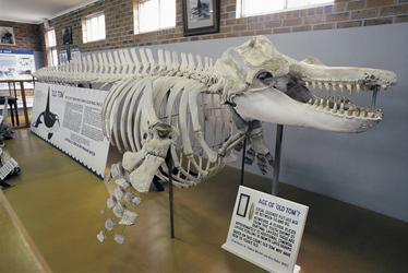 Im Walmuseum in Eden