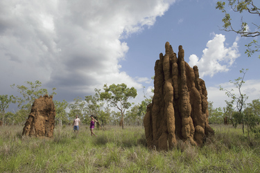 Termite Mounds ©Tourism NT