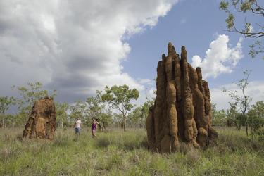 Termitenbauten - typisch für das Top End, ©Tourism NT