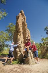 Termitenhügel im Litchfield NP