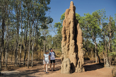 Termitenhügel im Litchfield NP ©Tourism NT, ©Tourism NT