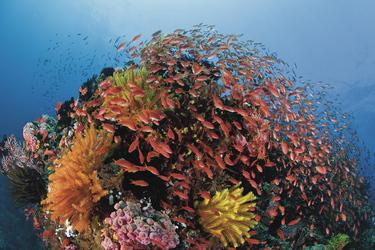 Great Barrier Reef ©Gary Bell