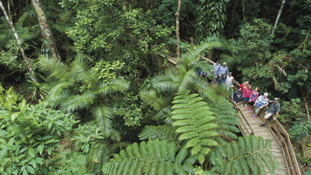 Daintree Rainforest, Cape Tribulation