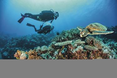 Tauchen am Great Barrier Reef, ©Christian Miller