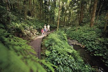Spaziergang in den Bunya Mountains