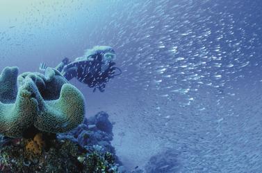 Fischreichtum ©Bob Halstead