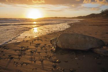 Bundaberg, Mon Repos Turtle Centre