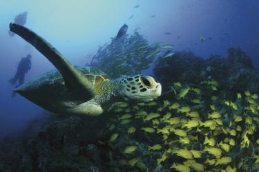 Great Barrier Reef Treiben