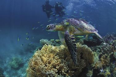Unterwasserwelt vor Fitzroy Island, ©Christian Miller