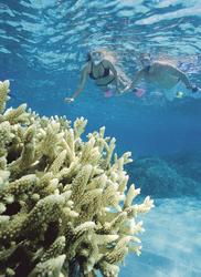 Schnorchler am Great Barrier Reef