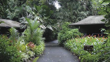 Eingebettet im tropischen Grün