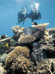 Taucher am Great Barrier Reef