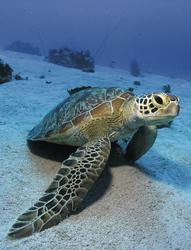 Auf Du und Du mit der Meeresschildkröte
