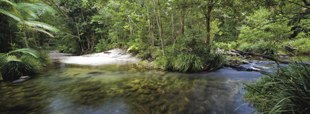 Mossman River, ©Steve Rutherford and Rutherford International Pty Ltd