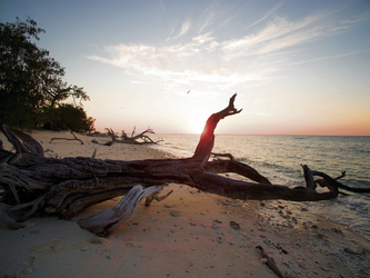 Strand auf Lady Musgrave Island