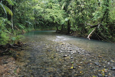 Coopers Creek, Daintree National Park
