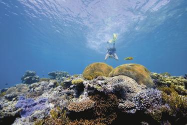 Schnorcheln am Great Barrier Reef