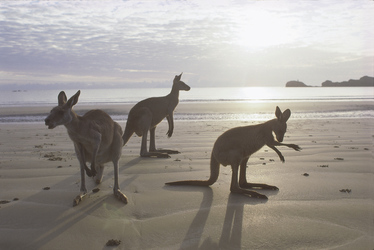 Am Cape Hillsborough ©Tourism and Events Queensland