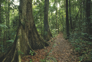 Eungella Nationalpark, ©Tourism Queensland Image Library