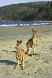 Begegnung am Strand bei Mackay ©Tourism Queensland