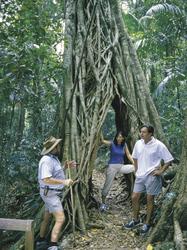 Eungella Nationalpark