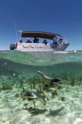 Schwimmen mit Seehunden, ©SATC