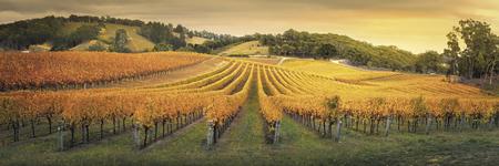 Weinanbaugebiet Adelaide Hills