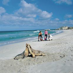 Bei den Seelöwen an der Seal Bay
