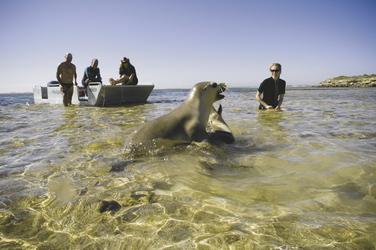 Schwimmen mit Seehunden