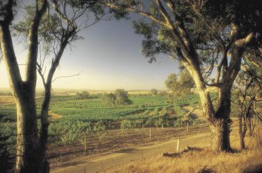 Weingut in Südaustralien