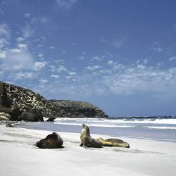 An der Seal Bay, Kangaroo Island