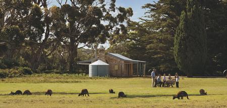 Picknick mit Kängurus , ©Adam Bruzzone