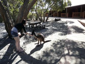 Besucher im Wilderness Retreat