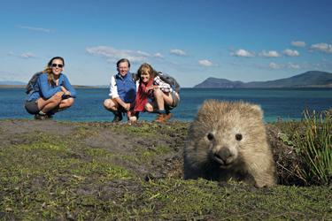 Zu Besuch bei den Wombats