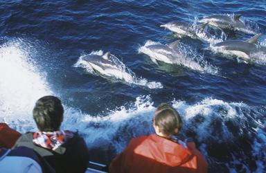 Delfinen ganz nah