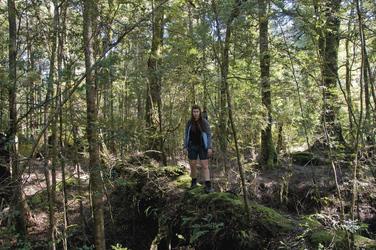 Im Tarkine Regenwald