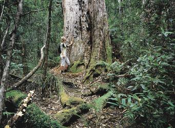 Im Tarkine Wald