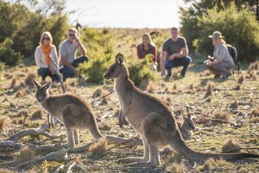 Kängurus auf Maria Island, ©Alastair Bett