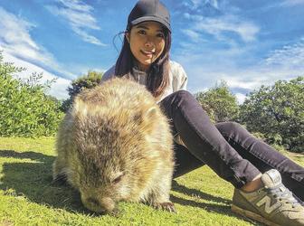 Freundlicher Wombat auf Maria Island