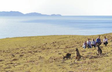 Kängurus auf Maria Island