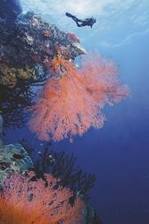 Tauchen am Riff