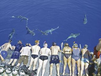 Neugierige Haie