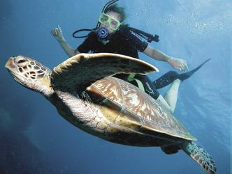 Begegnung Meeresschildkröte