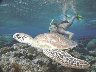 Beim Schnorcheln entdeckt - Meeresschildkröte