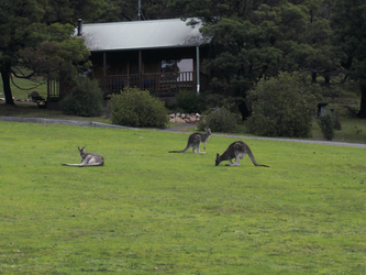 Gäste im Resort