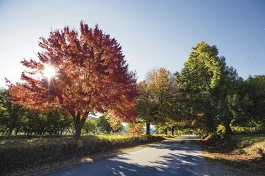 Herbststimmung in Bright