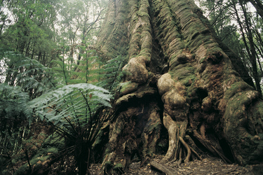 Im Great Otway Nationalpark