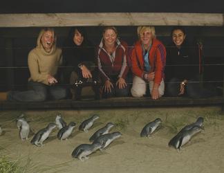 Pinguinbeobachtung im Phillip Island Nature Park