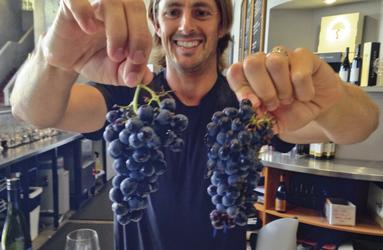 Die Trauben zum Wein