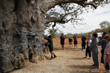 Beim Boab Prison Tree